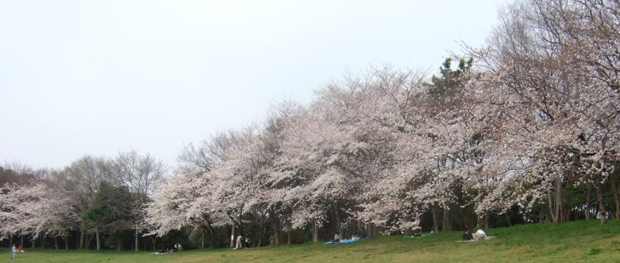 大泉緑地(堺市北区)