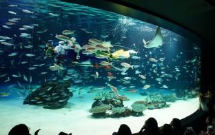 2016-9-date-tokyo-aquarium-001