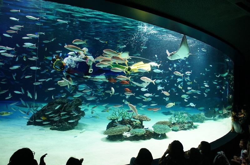 東京 水族館 デート