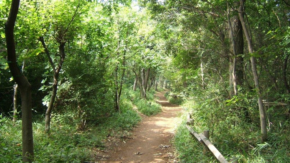 埼玉 トトロの森