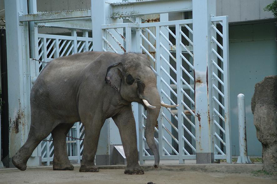 千葉市動物園