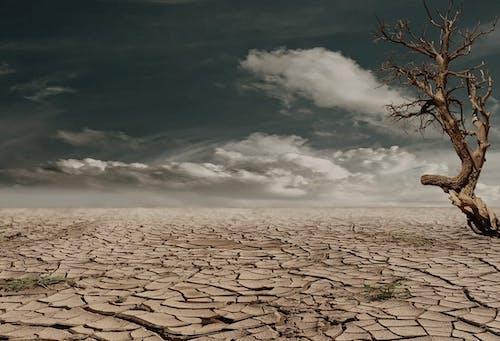 乾燥した地面